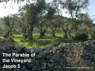 The Parable of the Vineyard: Jacob 5