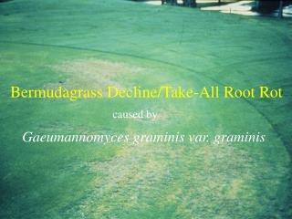 Bermudagrass Decline/Take-All Root Rot