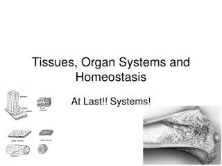 Tissues, Organ Systems and Homeostasis