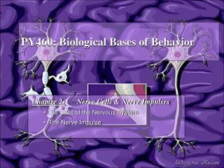 PY460: Biological Bases of Behavior