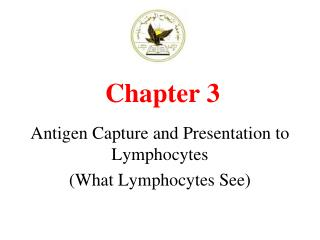 Antigen Capture and Presentation to Lymphocytes What Lymphocytes See