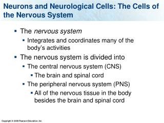 Neurons and Neurological Cells: The Cells of the Nervous System