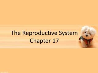 The Reproductive System Chapter 17