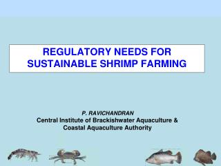 P. RAVICHANDRAN Central Institute of Brackishwater Aquaculture & Coastal Aquaculture Authority