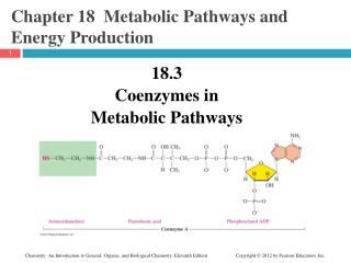 Chapter 18  Metabolic Pathways and Energy Production