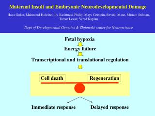 Maternal Insult and Embryonic Neurodevelopmental Damage