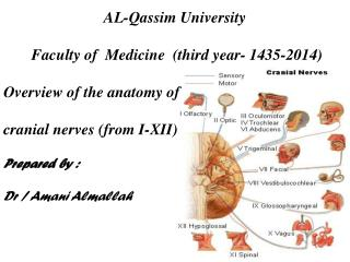 AL-Qassim University  Faculty of  Medicine  (third year- 1435-2014) Overview of the anatomy of