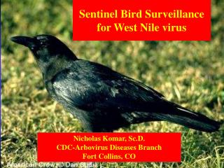Sentinel Bird Surveillance for West Nile virus