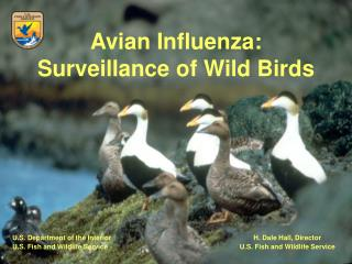 Avian Influenza: Surveillance of Wild Birds