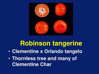 Robinson tangerine Clementine x Orlando tangelo Thornless tree and many of Clementine Char