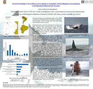 Current knowledge of orca ( Orcinus orca ) attacks on humpback whales ( Megaptera novaeangliae )