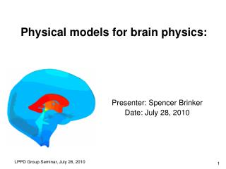 Physical models for brain physics: