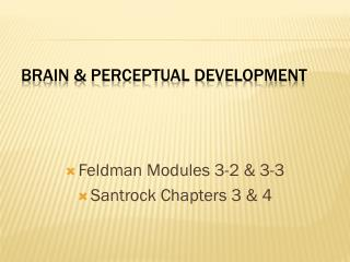 BRAIN & PERCEPTUAL DEVELOPMENT