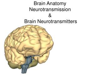 Brain Anatomy Neurotransmission &  Brain Neurotransmitters