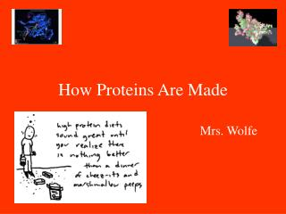 How Proteins Are Made