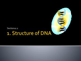 1. Structure of DNA