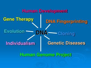 PPT - DNA Printing the double helix PowerPoint Presentation - ID:3172150