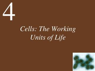 Cells: The Working Units of Life