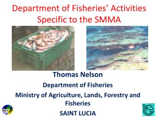 Department of Fisheries' Activities Specific to the SMMA