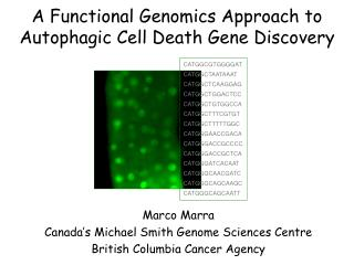 A Functional Genomics Approach to Autophagic Cell Death Gene Discovery