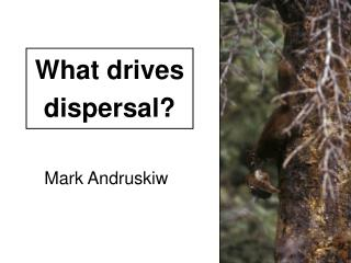 What drives dispersal?