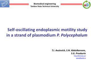 Self-oscillating endoplasmic motility study in a strand of plasmodium  P. Polycephalum
