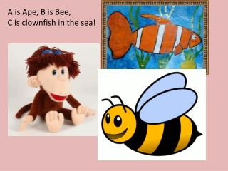A is Ape, B is Bee, C is clownfish in the sea!