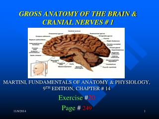 GROSS ANATOMY OF THE BRAIN & CRANIAL NERVES # 1