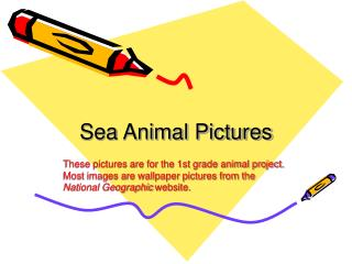 Sea Animal Pictures