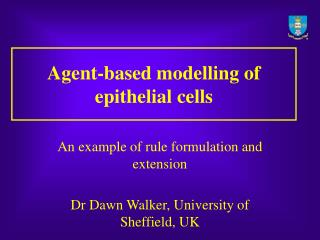 Agent-based modelling of epithelial cells