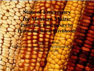 State of Emergency  for Mexican Maize: Protecting Biodiversity by  Promoting Rural Livelihoods