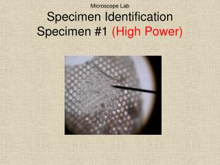 Microscope Lab Specimen Identification Specimen #1  (High Power)