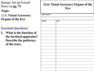 Sponge: Set up Cornell Notes on  pg. 71 Topic:  12.6:  Visual Accessory Organs of the Eye