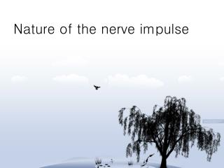 Nature of the nerve impulse