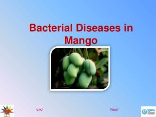 Bacterial Diseases in Mango