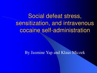 Social defeat stress, sensitization, and intravenous cocaine self-administration