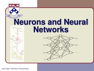 Neurons and Neural Networks
