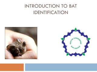 Introduction to Bat Identification