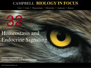 Homeostasis and Endocrine Signaling