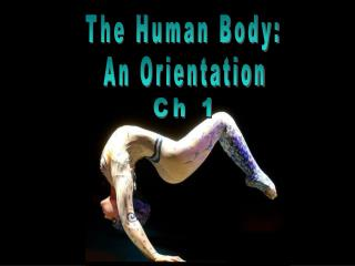 The Human Body:
