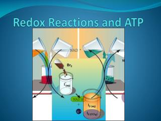 Redox Reactions and ATP