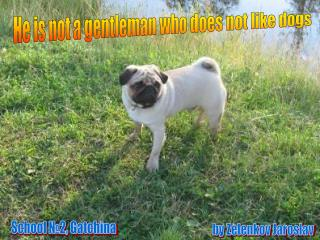 He is not a gentleman who does not like dogs