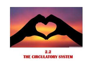 2.2  THE CIRCULATORY SYSTEM