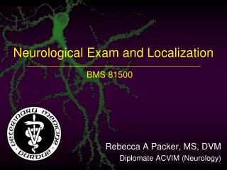 Neurological Exam and Localization