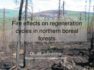 Fire effects on regeneration cycles in northern boreal forests