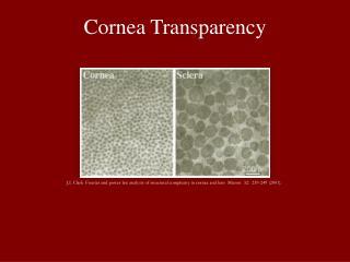 Cornea Transparency