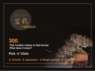 300.  This number relates to that bonsai.  What does it mean? Pick 'n' Click: