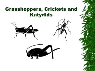 Grasshoppers, Crickets and Katydids