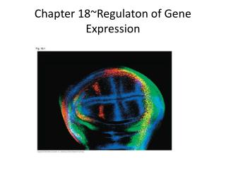 Chapter 18~Regulaton of Gene Expression