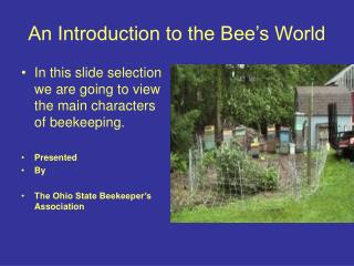 An Introduction to the Bee's World